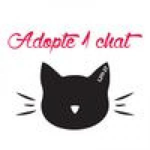 Adopte-1-chat---L211-27-CimVb