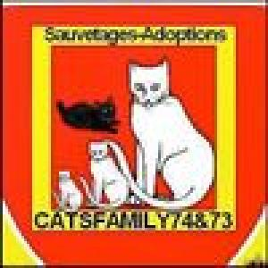 association-cats-family-74--73-jmbgj