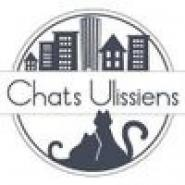 chats ulissiens8
